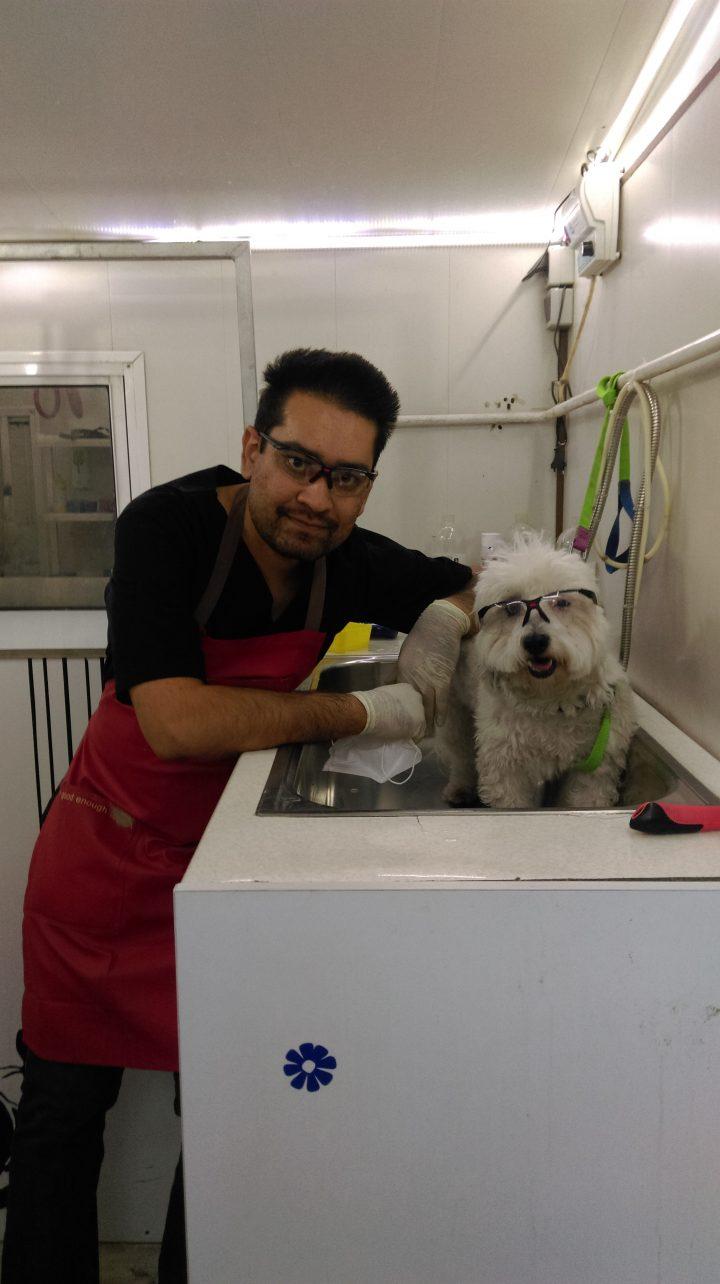 حسام حسینی آرایشگر حیوانات شما