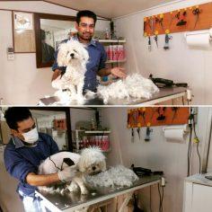 حسام حسینی ارایشگر عاشق حیوانات