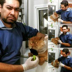 گربه ناز و زیبایی که توسط حسینی ارایش شده