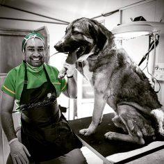 حسام حسینی در کنار یک سگ سرابی بزرگ