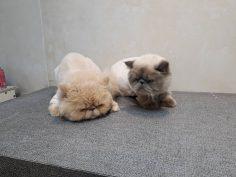 یک روز با ارایش های علی احدی  ارایشگر حیوانات خانگی