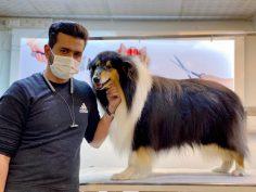 ارایش حیوانات خانگی