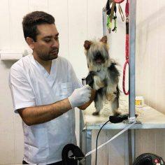 آرایش سگ های فعال و پرتحرک مشکل تر و نیازمند کنترل بهتر و مقید کردن ویژه است حتی اگر نیاز باشد با در آغوش گرفتن باعث آرامش پت شویم