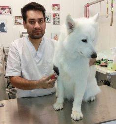 حفظ آرامش و مهرباني با حيوانات مهمترين اصول رفتار یک آرایشگر حيوانات میباشد
