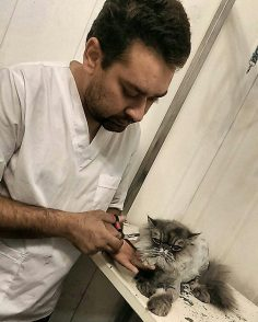 آرایشگر حرفه ای لزوما نیازی به بیهوش کردن حبوانات ندارد و حیوانات خانگی هم آرامش داشته و همکاری میکنند